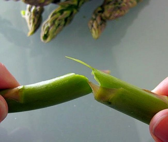 Snapping to remove the woody stem - discover how to cook asparagus here