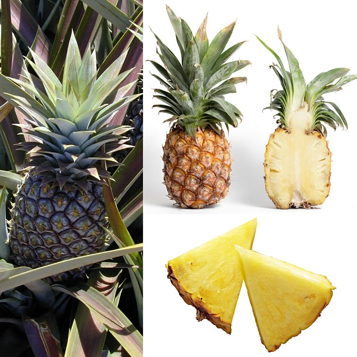 Fresh pineapple is very healthy with few calories, lots of fiber and an outstanding array of vitamins and minerals