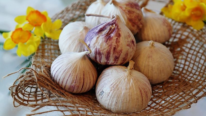 Garlic is so versatile and it is a shame to waste fresh bulbs in season